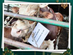 Kejagung salurkan 18 ekor sapi kurban untuk masyarakat dan pegawai